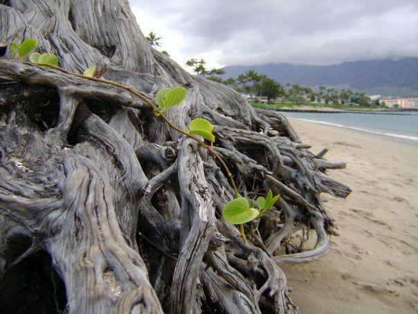 Kuai beach walk