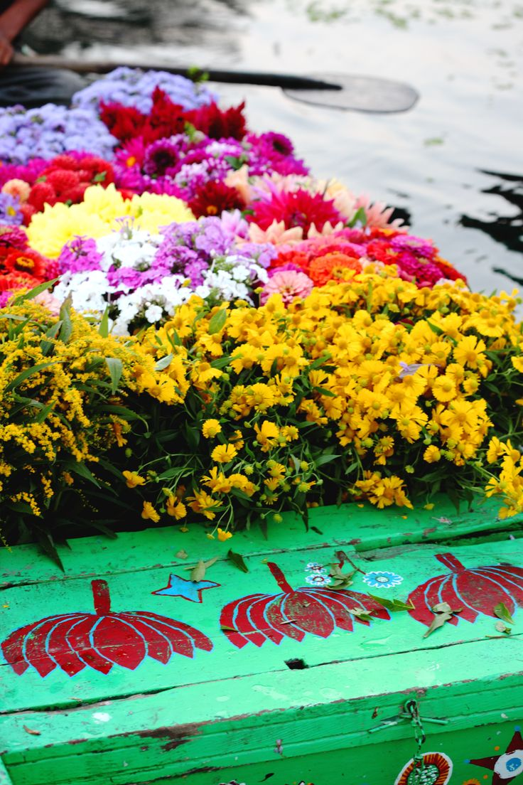 The flower man Srinagar Kashmir India