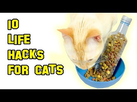 How to Make a Self Scratcher for Cats - YouTube