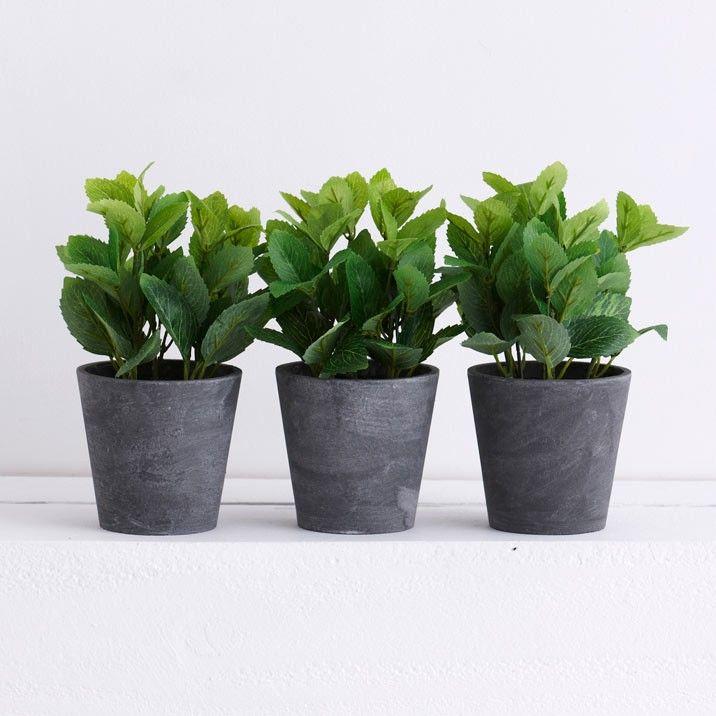 Mint In A Grey Planter - Mint In Grey Pot
