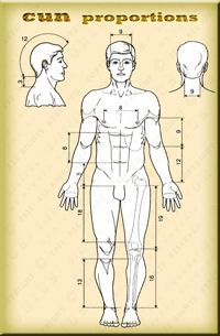 Human Body With Descriptions How Much Cun Are From One Body