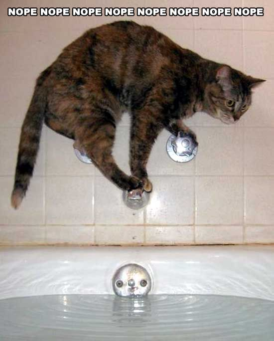 Everybody knows that cats don't like to get wet but this is taking things to a whole new level! #cat #ninjacat #funnycat