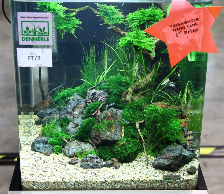 Nano Aquarium Bonsai Google Search Cube For Shrimp