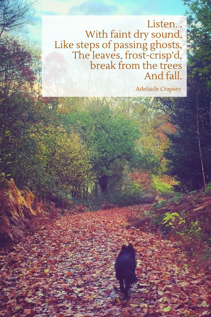 A beautiful quote about the autumn colours and autumn leaves, with a photo of Mitsi the dog walking through her favourite Shropshire wood.  An autumn poem by Adelaide Crapsey #autumn #quotes