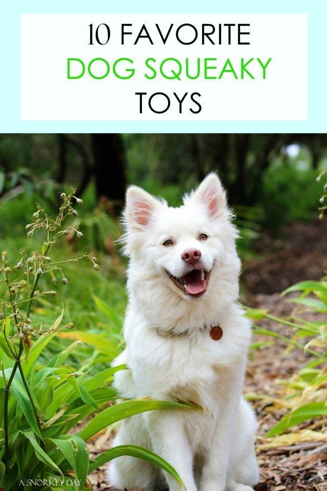 10 Favorite Dog Squeaky Toys A Snorkey Day Dog Squeaky Toys