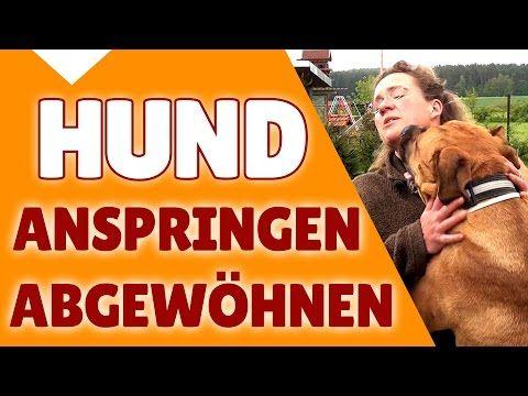 ►► Hund Anspringen abgewöhnen ✔ Wie du deinem Hund das Anspringen abgewöhnen oder verhindern kannst✔ - YouTube