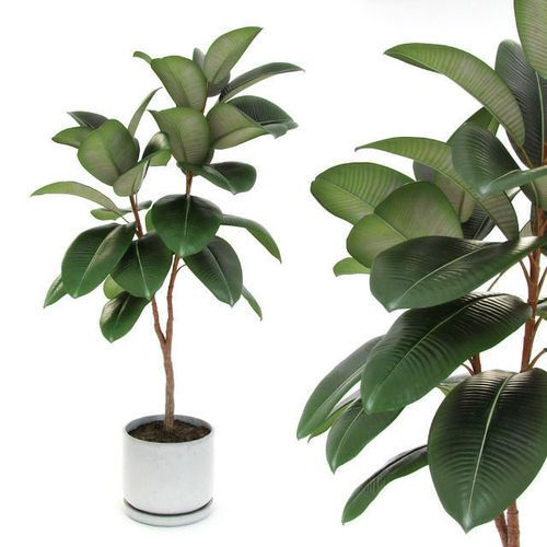 Ficus elastica decora medium 3d model showcase for Fausse plante verte interieur