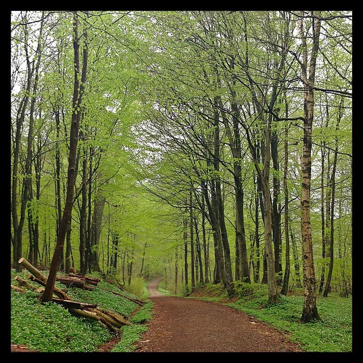 Hindemade Forrest at Haderslev, Denmark.