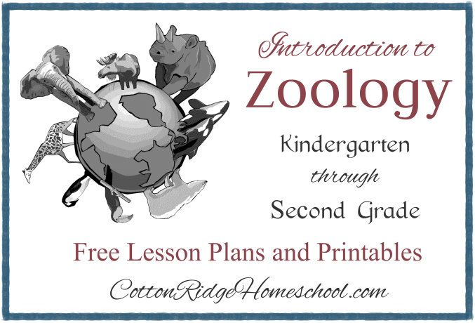 Introduction to Zoology for students in Kindergarten through Second Grade ~ 12 Free Lesson Plans and Printables