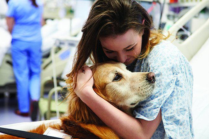 Mrsa In Therapy Dogs Preventing Transmission In Hospitals