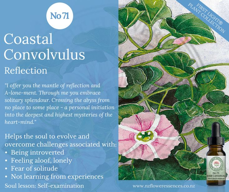 Coastal Convolvulus - Reflection - enhances and deepens spiritual consciousness. Helps you to see matters from a higher perspective and to shine light on a puzzling situation. Assists in understanding the inner nature of things and seeing your part in the plan. Use after a period of great activity or stress when rest and recovery are needed while one seeks a new direction. Assists during a personal vision quest, meditation, self-refelction and self-examination.
