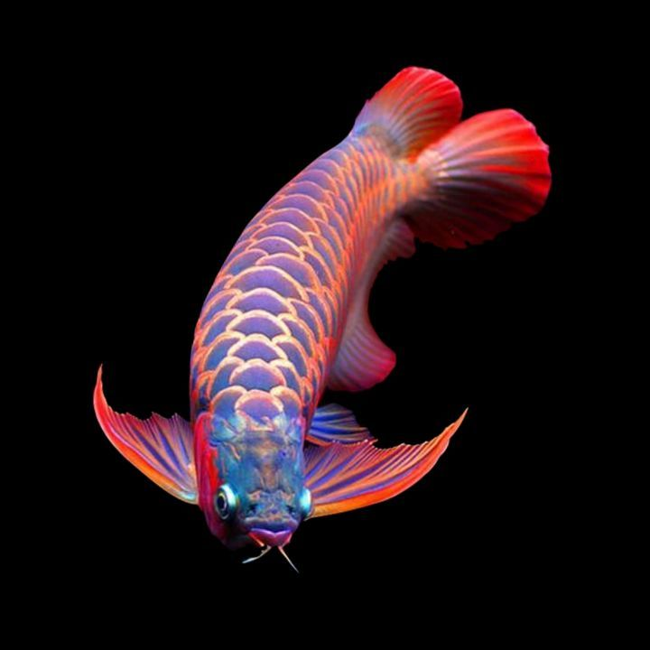 Expomx In Online Shopping For Pets Plant And Supplies Tropical Fish Fish Pet Fish
