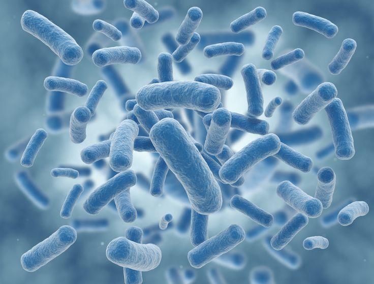 Podemos necesitar incluir en nuestra nutrición probióticos, prebióticos o simbióticos... #farmacia #farmaciasarafibla #sientetebien #nutricion #probioticosprebioticossimbioticos