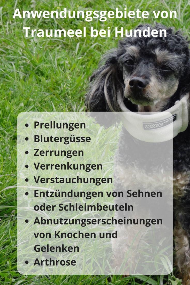 Traumeel wirkt sehr gut für meine Hunde. Hier finden Sie Anwendungsgebiete bei Hunden, meine Erfahrungen mit Traumeel, ohne Nebenwirkungen weil es ein homöopathisches Arzneimittel ist.