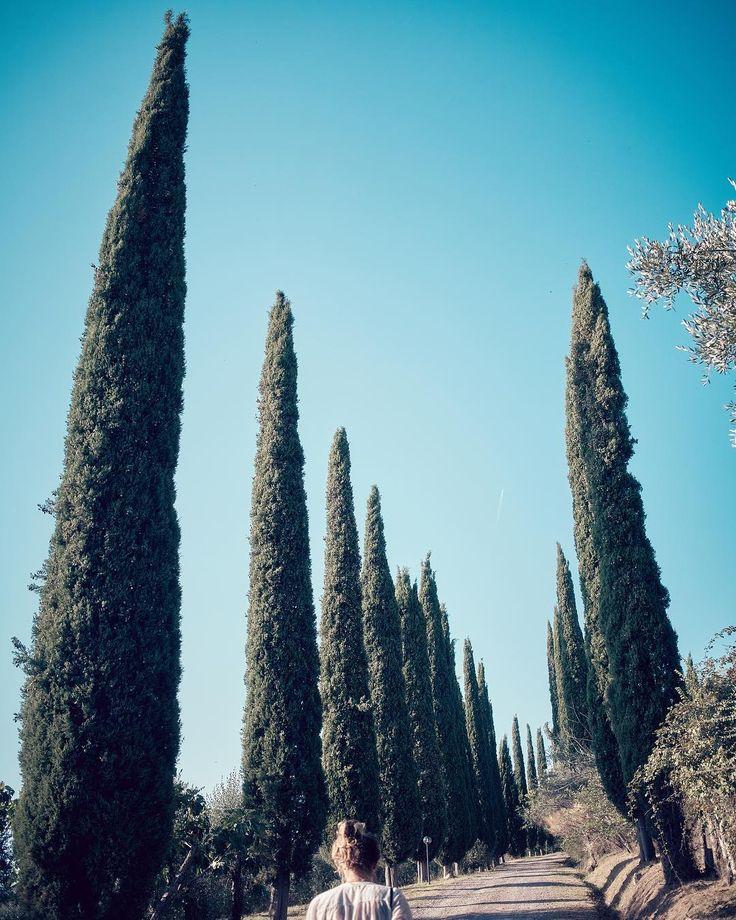 ___________________________________________________  #DerWeg  #Toscana #Italia #Cypress #Olivi #Perspective #Zypressen #Landschaft #Tuscany #Italy #Landscape #Travel #Nature #Natur #Cipressi #Olivenhain #Idylle #Vacanze #Holidays #Green #Tourist #Italien #Urlaub #Blue #Sky #Himmel #Bluesky #Travelphotography #Travelling #oliverfritze  ___________________________________________________