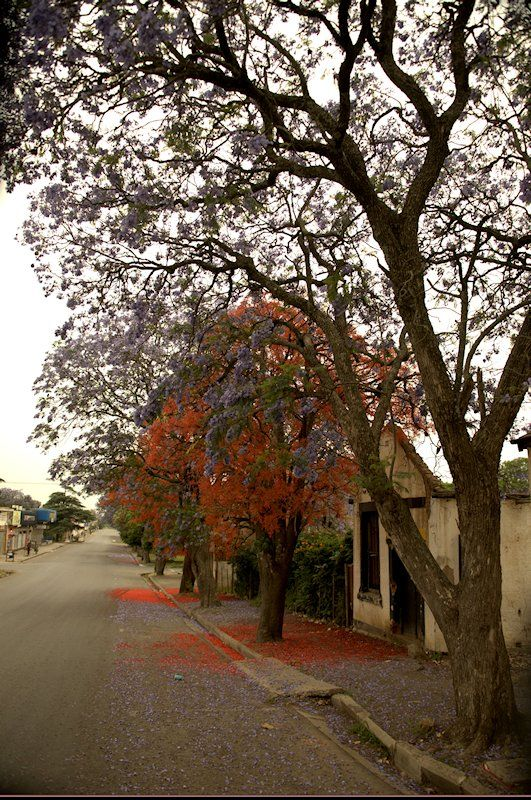 Colours of Spring -  Eastern Cape, South Africa