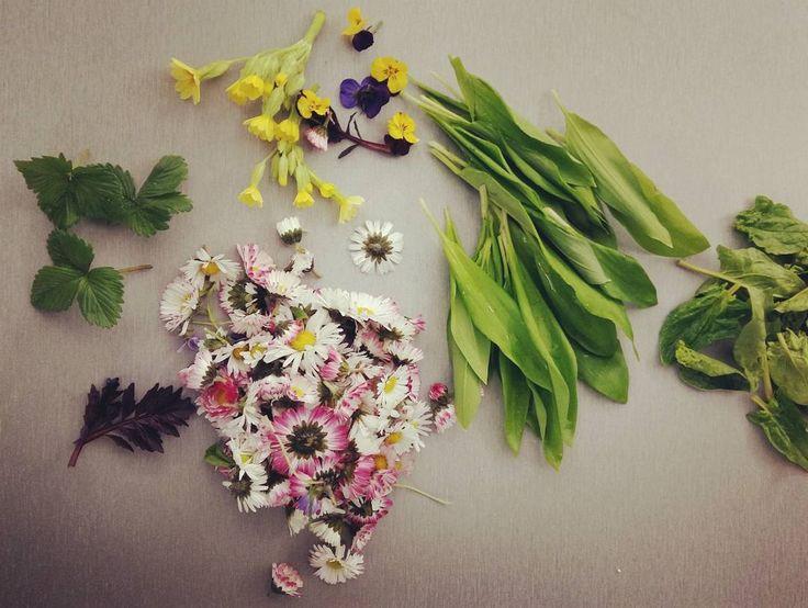 Když vás má vaše pěstitelka bylinek ráda, a i když toho zrovna moc neroste, dostanete takovéhle parády. #spring #flowers #farmer #udolimlynce