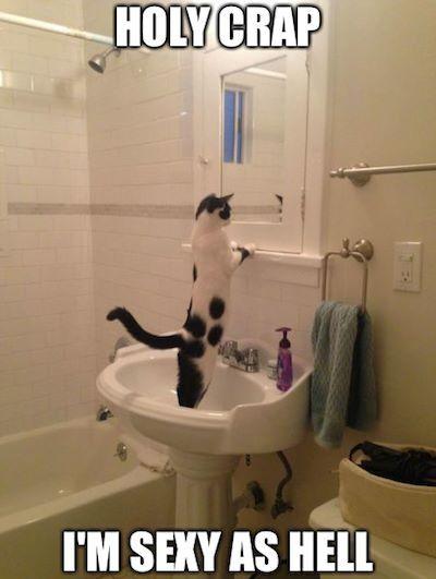 kittens cabaret memphis