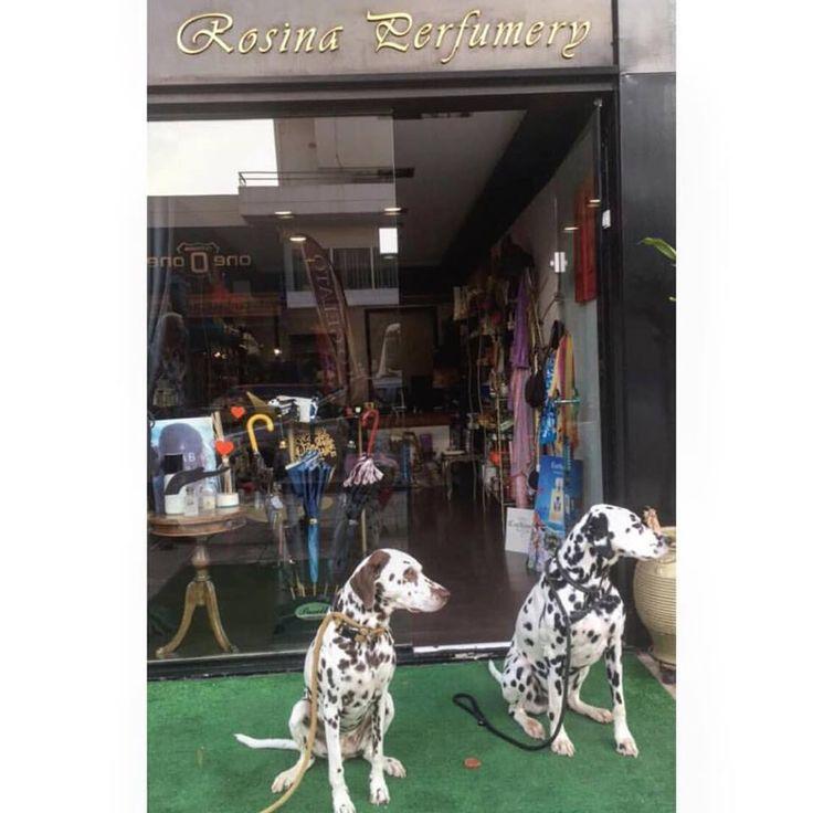 #beauties #dogs #dalmatian #perfumes #perfumery #rosinaperfumey #giannitsopoulou6 #glyfada #athensreviera #athens #greece #shoponline : www.rosinaperfumery.com