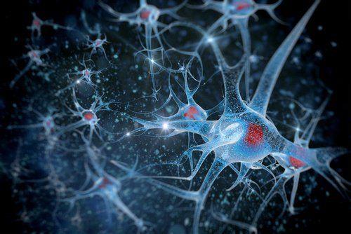 Auswirkung von WLAN auf Neuronen