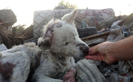 Dog Rescued from Trash Dump Befriends Pup Saved from Drainpipe