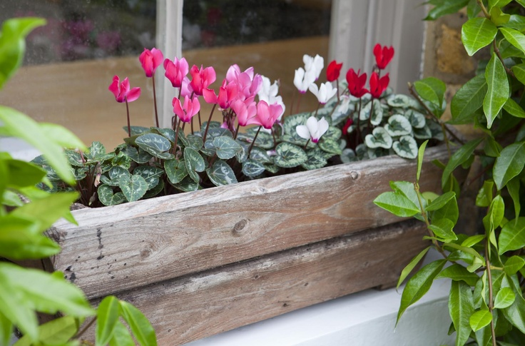 Leopoldina Haynes' garden, window box