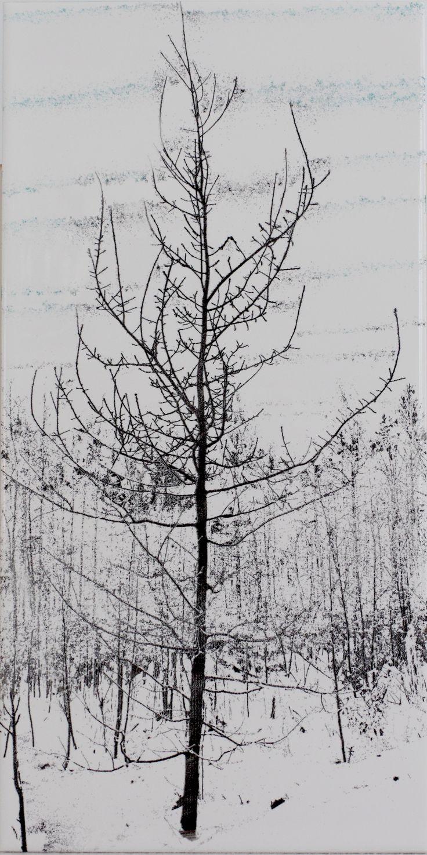 Oak sapling in winter scenery - engraved to ceramic tile