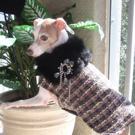 The Uptown Girl Coat for an Italian Greyhound by AcmeCouture, $75.00