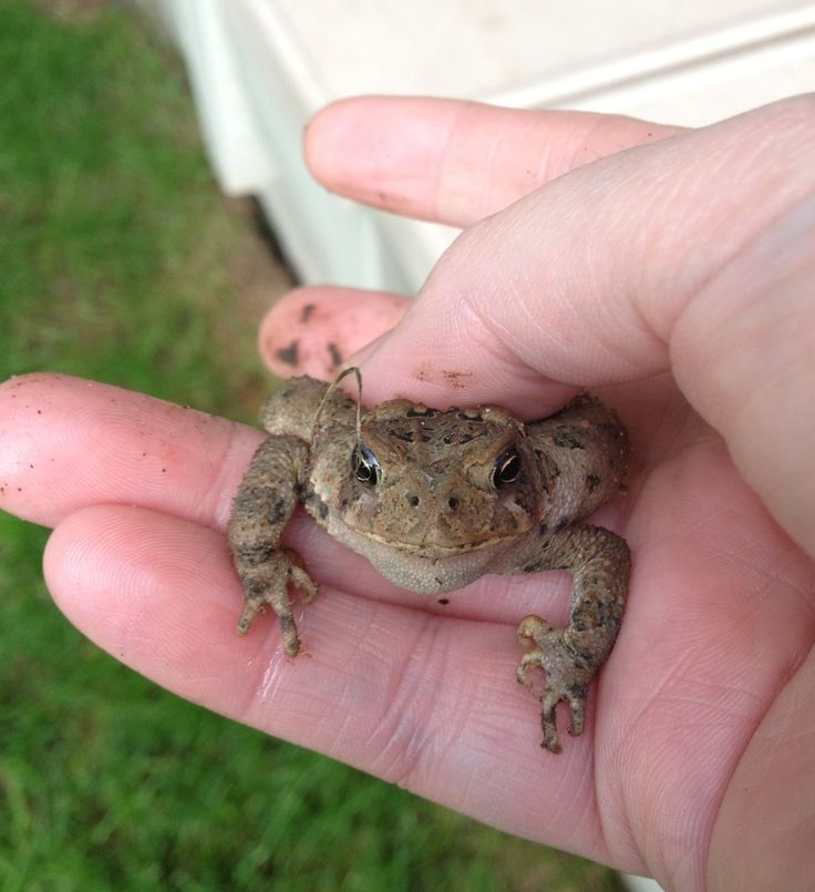 This little fellow was found by our puppy Paris the toad with the devilish grin peeped on me while taking this shot lol