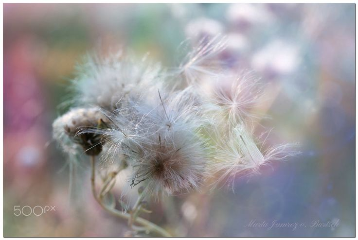 Gone with the Wind by Marta J. V. Bartsch on 500px