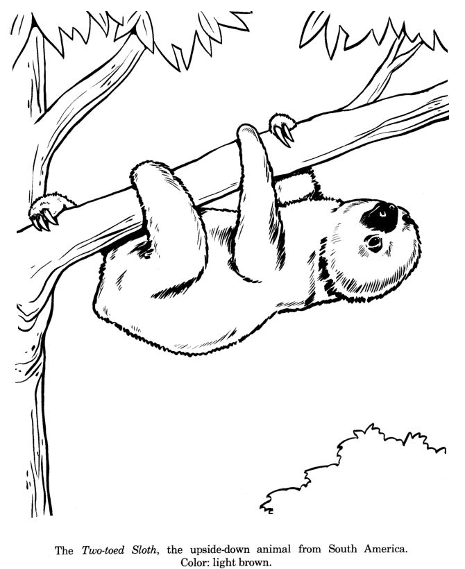 two toed sloth drawing and coloring page