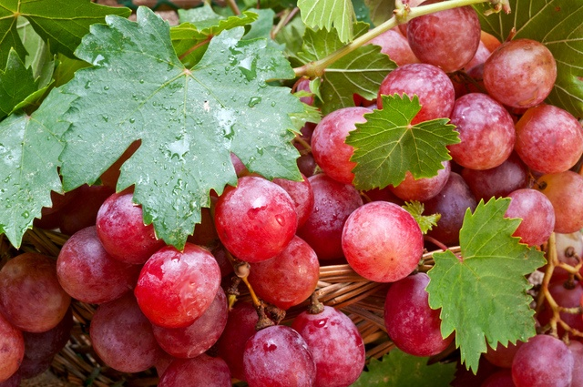 Anti-aging formula developed in Hong Kong with red grape compound as key ingredient