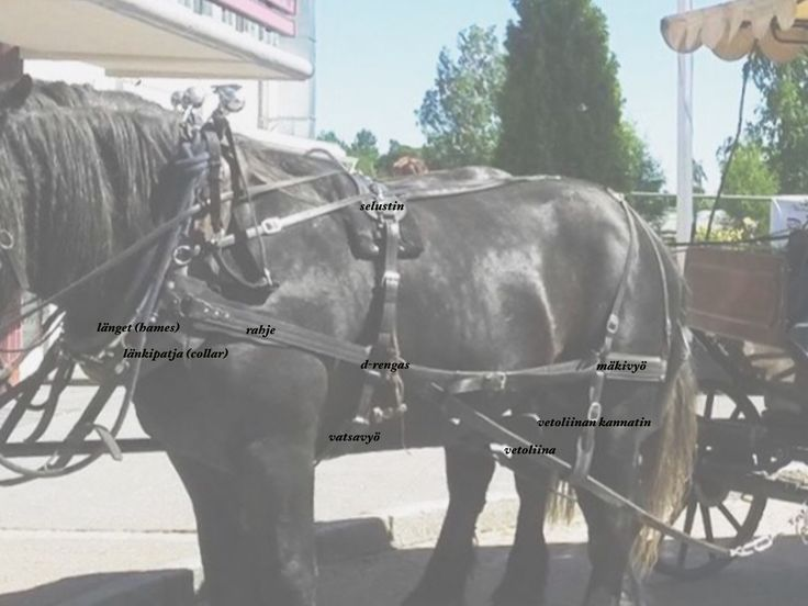Amerikkalainen työvaljastus; video, valjaiden osat   mw hevospalvelut