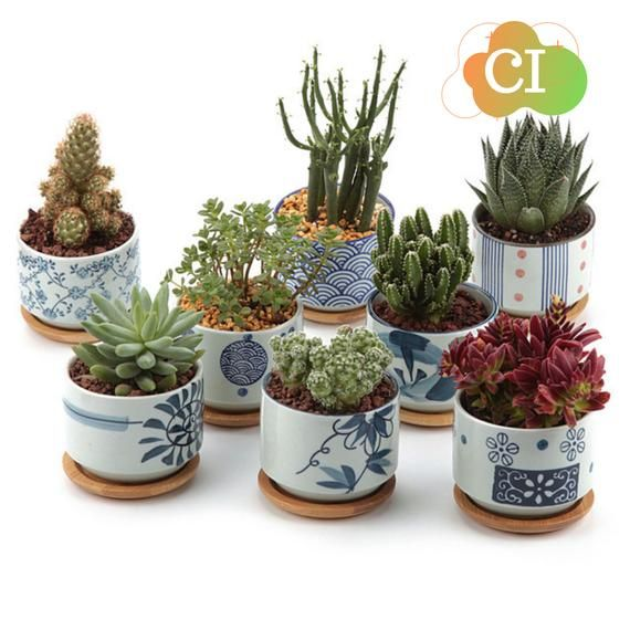Japanese Style Ceramic Planter Pot With Bamboo Tray Home Office Decorative Ceramic Pots Cacto Decoracao Arranjos De Plantas Suculentas Ideias De Jardinagem