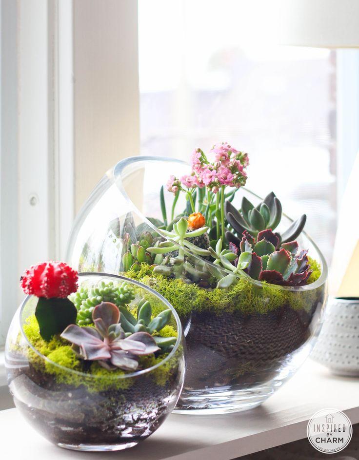 DIY Succulent/Cactus Tabletop Garden http://www.amazon.com/Oasis-Ceramic-Self-Watering-Planter/dp/B00AQ45C76/ref=sr_1_1?ie=UTF8&qid=1397763459&sr=8-1&keywords=oasis+self+watering+planter: