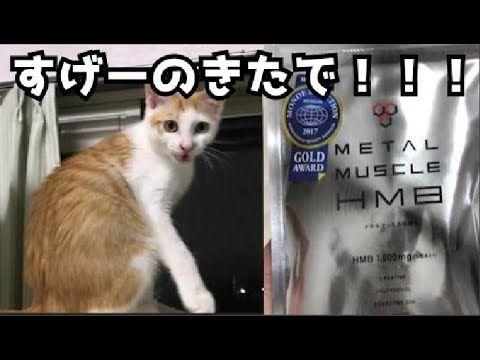 【猫とダイエット計画】飲んで痩せるすっごいサプリ!?買ってみた!【HMB】