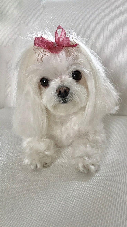 A girly Bailey...