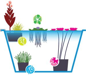How to assemble a pond in a pot.