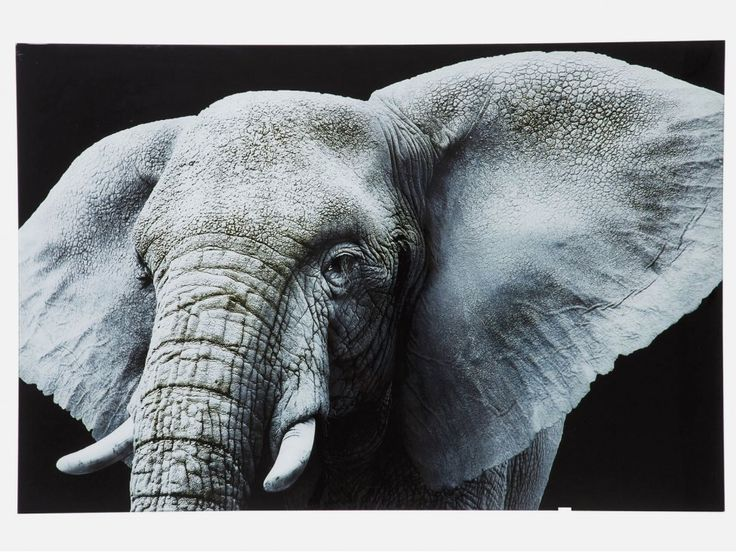 Obraz Face Elefant — Obrazy — KARE® Design #KARE #DESIGN #modern #furniture #ILOVEKARE #KARE24 #picture #animal #black #white #elephant