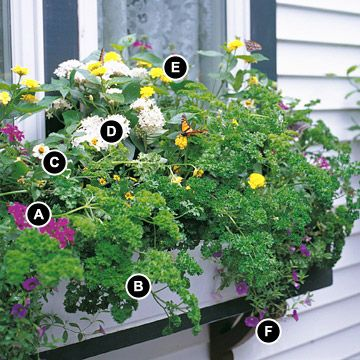 Butterfly Window Box ~~ A mixture of caterpillar host plants and butterfly nectar plants will ensure that many butterflies visit your window box.