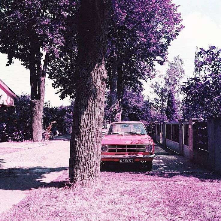 Photo taken with the newly formulate LomoChrome Purple 120