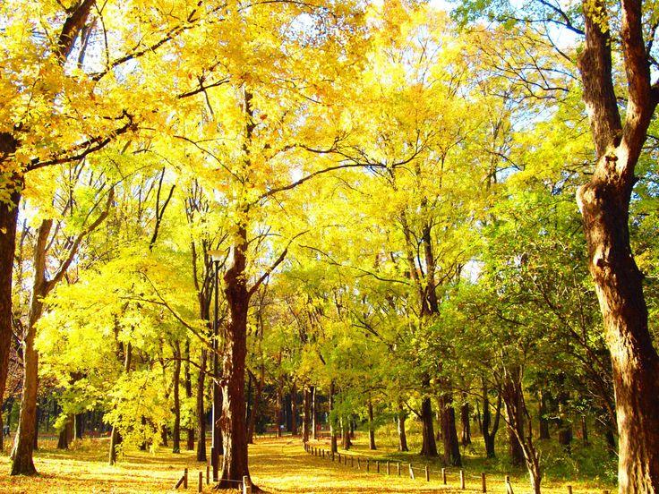 Japanexperterna.se春が近づいてきてぽかぽかとしてくると、お弁当を持ってピクニックに出かけたくなりませんか?でもわざわざ遠くに行かなくても大丈夫!「都会のど真ん中」と思っている東京都内にも意外にピクニックが楽しめるスポットはあるんです。あなたの家や職場のそばにもピクニックに最適な公園があるかもしれませんよ!?1. 都立小金井公園 【小金井市ほか】 http://www.de-cha-ya.com/?m=201309小金井市と一部が小平市・西東京市・武蔵野市にまたがる東京都立の公園。面積約80haという大変広い敷地。日比谷公園の4.8倍、上野公園の1.4倍もあります。芝生がとてもきれいで広いのが特徴で、ピクニックには最適。花見スポットとしても有名で「日本さくら名所100選」にも選ばれています。都立公園としては最大規模を誇り、東京ドームおよそ17個分に匹敵するほどの広さを有します。初代天皇である神武天皇の即位から2600年目に当たる1940年(昭和15年)に発足された「紀元二千六百年記念行事」の一環として計画された小金井大緑地が...