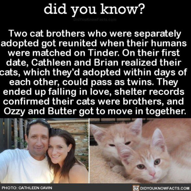 Just a coincidence or...?  #fate #love #cue #adorable #cats #tinder Download our free App: [LINK IN BIO]