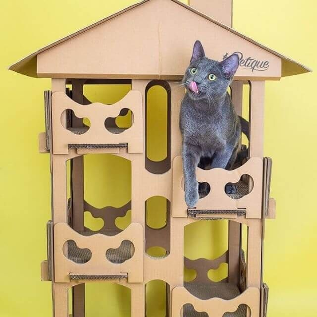 5 Ideas To Keep Your Cat Active Cardboard Cat House Cat Activity Cat Day
