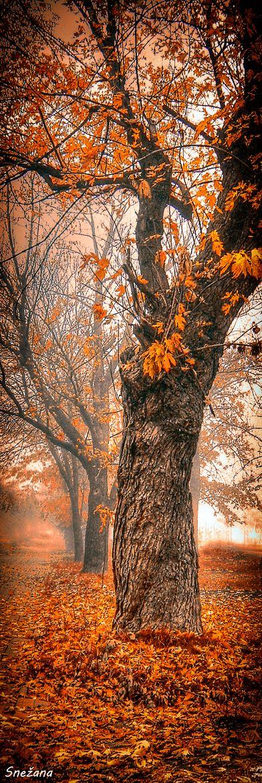 A Foggy Autumn Morning