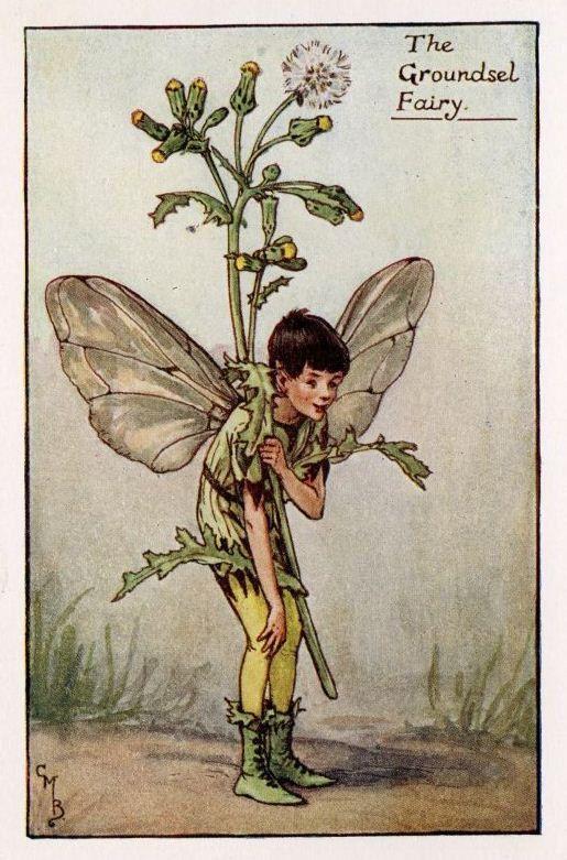 Groundsel Flower Fairy Vintage Print, c.1927 Cicely Mary Barker-boekillustratie plaat