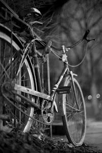 Gears, Spokes, and Trees    Photographer: Serge Ivanov