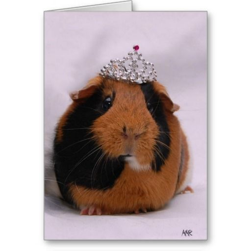 >>>Cheap Price Guarantee          Princess Birthday Greeting Card           Princess Birthday Greeting Card lowest price for you. In addition you can compare price with another store and read helpful reviews. BuyReview          Princess Birthday Greeting Card today easy to Shops & Purchase ...Cleck link More >>> http://www.zazzle.com/princess_birthday_greeting_card-137980928526520372?rf=238627982471231924&zbar=1&tc=terrest