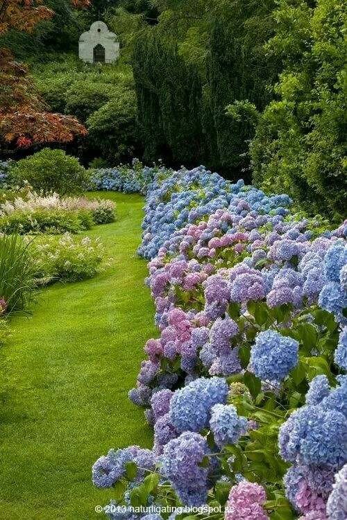 Garden Ideas Borders 804 best garden border ideas images on pinterest | flowers