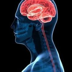 """Stimulating your vagus nerve creates a neurobiological snowball effect that will give you grace under pressure in any stressful situation. In this entry I offer 8 habits that will stimulate your vagus nerve and promote healthy """"vagal tone"""" which produces a calm, confident, and optimal state of mind and body for peak performance...and many other health benefits."""